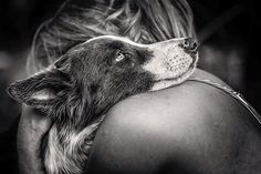 The Best Photos ( Border Collie) From the Kennel Club's Dog Photographer of the Year Contest 2015