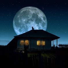 Super view  Full moon and cat on the roof - Photo manipulation by Caras Ionut