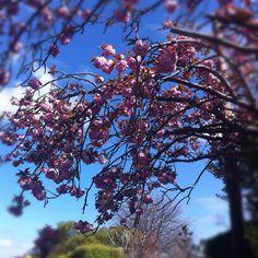 Beautiful spring day in Dublin