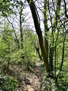 Path in the woods, Crabtree Park