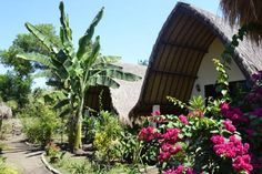 3 Angels Homestay in Gili Air, Indonesia - Lonely Planet