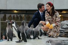 Princess Mary and Prince Frederik Photos - Danish Crown Prince Frederik and Crown Princess Mary, who is pregnant with twins, feed Humboldt penquins at the Ozeaneum maritime museum and aquarium on September 27, 2010 in Stralsund, Germany. Frederik and Mary are on a two-day visit to northern Germany. - Danish Crown Prince Couple Visit Germany