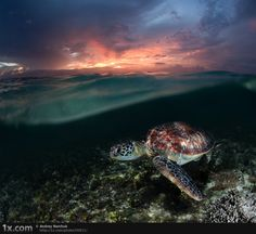 Seriously, sea turtles are the best. Nice work Andrey Narchuk.