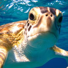 Earthwatch Research Expeditions: Swimming with Sea Turtles in the Bahamas