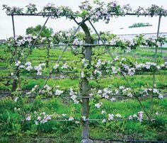 Мир растений и деревьев | Журнал «Дом и <b>сад</b>
