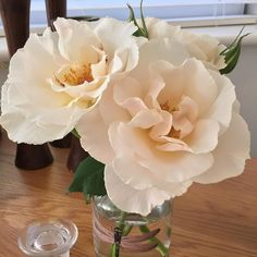 Margaret Merril ..... how pretty can a Rose get .....
