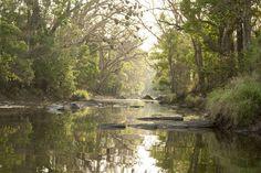 Kanha national park - AB Apana/Getty Images