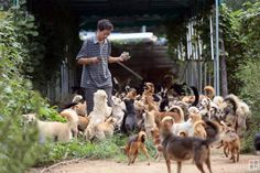 """Chinese """"Guardian of Dogs"""" Has Rescued Over 700 Strays in the Last 8 Years - http://www.odditycentral.com/animals/chinese-guardian-of-dogs-has-rescued-over-700-strays-in-the-last-8-years.html"""