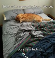 Funny Animal Pictures Of The Day � 28 Pics