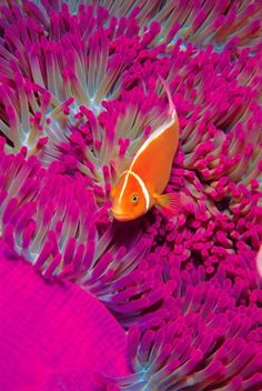 Coral Reef Madness, I like this picture because of the coral in the background contrasting with the fish.