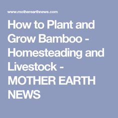How to Plant and Grow Bamboo - Homesteading and Livestock - MOTHER EARTH NEWS