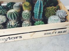 [open w/oliver] I was setting my plants in a crate, trying to organize them. Louis told me I had too many and had to get rid of some. I huffed to myself, and turned my head when I heard you say..