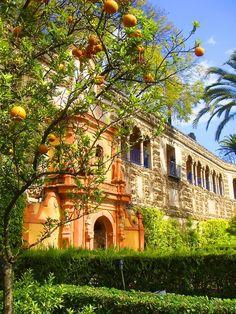 El Real Alcázar de Sevilla, España. Son un grupo de palacios rodeados por una muralla, su construcción remonta en la época de la Edad Alta Media (476-100). Se componen de diferentes estilos desde el islámico, el mudéjar y gótico. Actualmente es residencia de los miembros de la Casa Real Española.