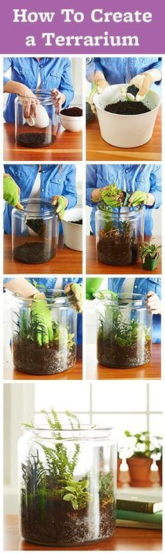 It's easy to make a beautiful terrarium! Here are step-by-step instructions to make your terrarium great. How To Make Terrariums, Succulent Terrarium, Succulents Garden, Garden Plants, Planting Flowers, Making A Terrarium, Terrarium Wedding, Vegetable Garden, Air Plants