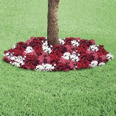 Sweet William Floral Ring  $12.98    Product  - Pre-seeded floral ring spruces up lonely trees instantly! Natural mulch and seed mat produces a full 2-ft. wide circular bed of flowers. Place around base of tree or high standing shrub, then add water. In no time, your tree base will be blanketed with colourful blossoms! 2-ft. Diam.