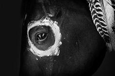 indian horse | Tumblr