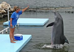 Dolphin Research Center - Photos by Dolphin Research Center (Grassy Key, Florida)