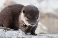Otter pup has a private little chuckle - May 8, 2014