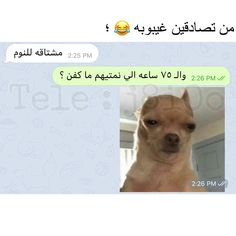 Arabic Memes, Funny Arabic Quotes, Funny Quotes, Funny Memes, Jokes, Iphone Wallpaper Eyes, Iphone Wallpaper Quotes Love, Relationship Goals Pictures, Love Quotes For Him
