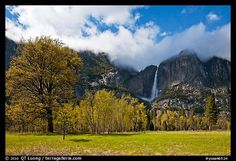 Meadow, trees, and Yosemite Falls in spring. Yosemite National Park by QT Luong