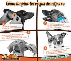 #Tip #UniversoMascotas; La clave para una buena salud auditiva, es la correcta y constante limpieza de los oídos de tu mascota.