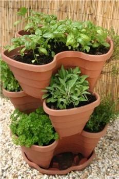 Kruidentuin starten voor beginners - kruiden kweken binnenshuis