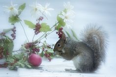 Daisy and apple by Andre Villeneuve on 500px