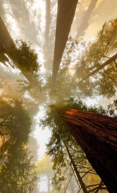 California Redwoods The 30 Most Beautiful Nature Photography - organic adventure in the wild through a forest of evergreen trees in the fall autumn through fog like a hippie boho bohemian Beautiful World, Beautiful Places, Beautiful Pictures, All Nature, Amazing Nature, Landscape Photography, Nature Photography, Photography Tips, The Art Of Photography
