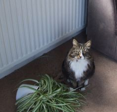 My cat is smug because his horticulture skills are in demand & other cats constantly ask him for tips on plant care.