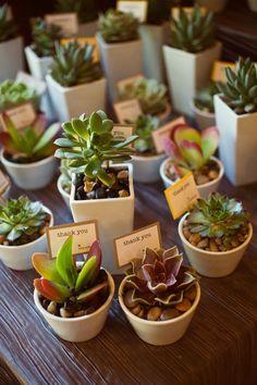 Bomboniere di matrimonio con piante grasse Pagina 22 - Fotogallery Donnaclick