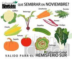 qué sembrar en noviembre... hemisferios sur