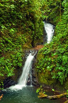 A cloud forest waterfall in Monteverde, Costa Rica, Central America.