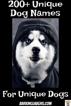16 Ideas dogs names husky for 2019 Unusual Dog Names, Boy Dog Names Unique, Unique Female Dog Names, Beautiful Dog Names, Great Dog Names, Girl Dog Names, Baby Names, Funny Dog Names Female, Husky Names Male