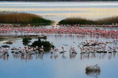 Even the arid regions of the Northern Cape have a surprise or two waiting around the corner. Flamingos near Kimberley. Paises Da Africa, Out Of Africa, Places To Travel, Places To See, Visit South Africa, Namibia, Thing 1, Beaches In The World, Mundo Animal