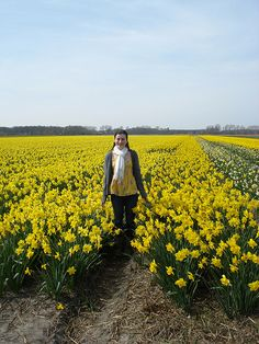 """Tulips in Holland"" Student Photo in the Netherlands"