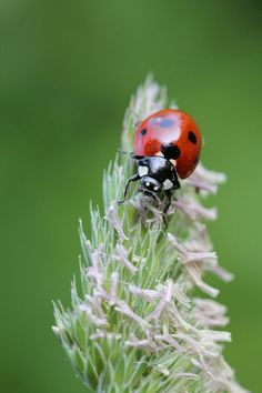 Ladybug ~ by MURIELLE