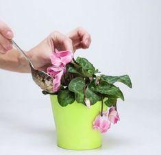 In pochi giorni la vostra pianta sarà più bella che mai!