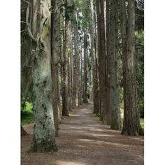 Path through trees leading to Okoroire Hot Springs Hotel Tirau North Island New Zealand Canvas Art - Panoramic Images (18 x 24)