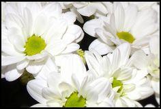 Tableau fleur prêt à poser 40X30 cm. par artstops sur Etsy
