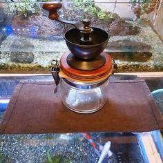 【toshi_bby】さんのInstagramをピンしています。 《メルカリでコーヒーミル買ったけど、近くの豆専門店は高いのでスーパーで豆買ってきた😅 それでもコンビニコーヒーよりは美味しい☕  #コーヒーミル #coffee #coffee☕ #colordcarp  #錦鯉  #koi #銀鱗プラチナ #テラリウム #terrarium #terraquarium》