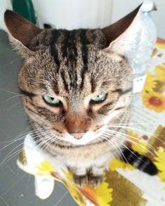 #buongiorno dal #gatto #cat #goodmorning #amore #love #casa #home #piccolo #sweet
