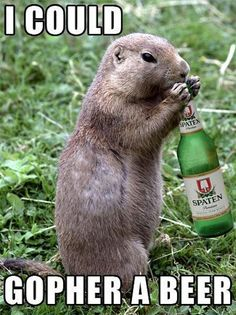 gopher a beer, funny puns, funny photos