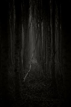 Dark Forest by Steven van der Hoeff by Hercio Dias Dead Forest, Tree Forest, Forest Photography, White Photography, Dark Tales, Haunted Forest, Mystery, Mystique, Nature Pictures