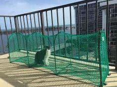 Slikovni rezultat za cat safe balcony