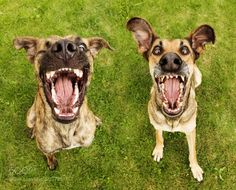 Photograph Angry birds by Elke Vogelsang on 500px
