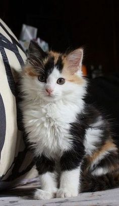 The Cutest Face - Click to see loads of great pictures of cats and kittens to brighten your day.