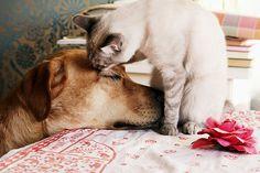 by pruginko, via Flickr #dog #cat