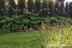 Ogródek Iwony - strona 975 - Forum ogrodnicze - Ogrodowisko