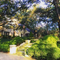 Bubbles of boxwood on a spectacular lot. #chicindallas #architecture #landscape #garden #yard #thepottedboxwood