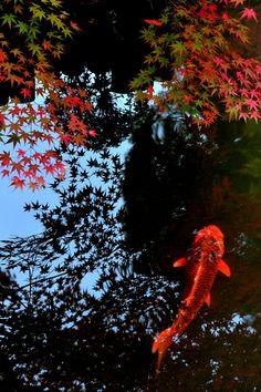 天授庵 Tenju-an Temple,Kyoto